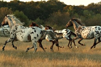 photo credits: DREA (www.D-Rea.com)