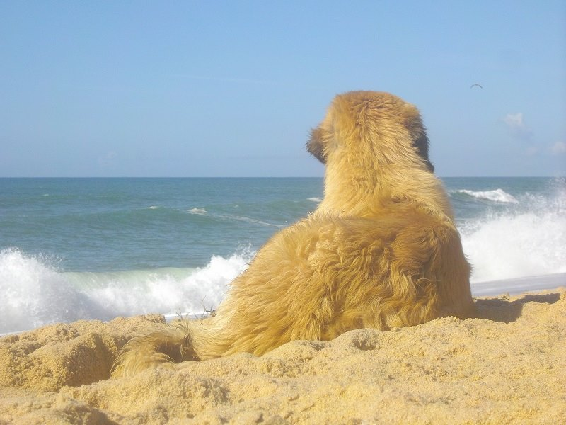 the pup, the sea and the distant bird (G.A.)